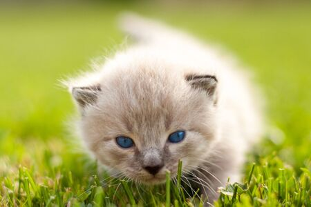 White kitten on a green lawn. Selective focus. Stock Photo - 6008594