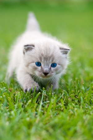 White kitten on the grass.