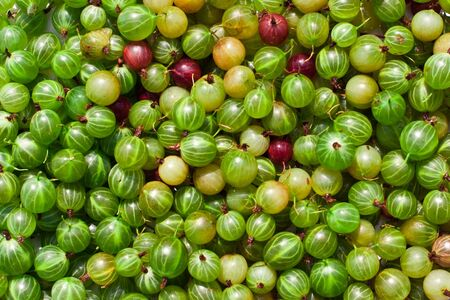 Gooseberries Stock Photo - 11889326