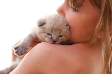 Child and a white kitten. photo