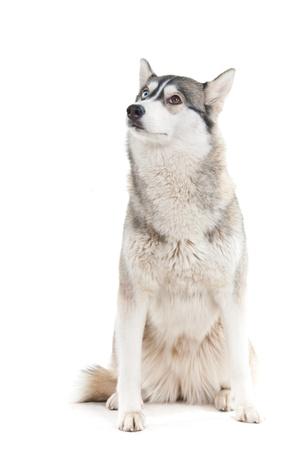 Dog on a white background.  photo