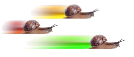 Concept. fast snail with colored silhouette. Focus on front snail. photo