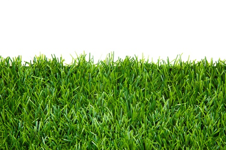 frame background with green grass isolated photo