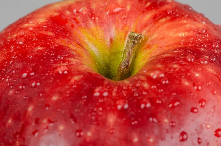 Wet red apple  Close up, macro shot photo