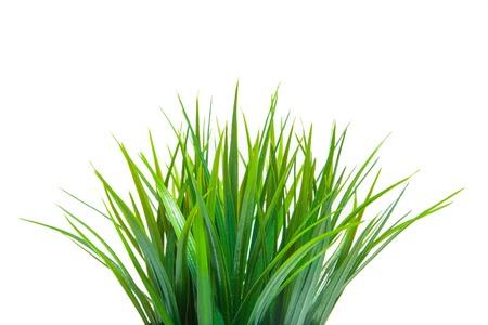 Het groene gras op wit wordt geïsoleerd. Zijaanzicht.