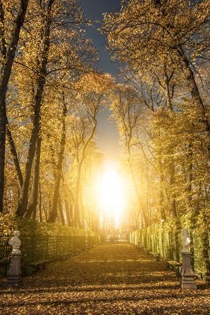 Summer garden park in Saint Petersburg Russia