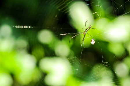Spider and spider web against a green background in nature Stock Photo