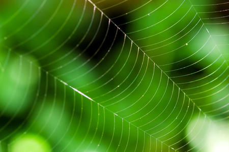 animal trap: Spider web against a green background in nature Stock Photo