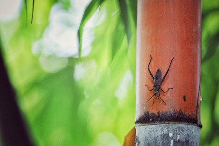 insect on tree, bamboo tree with red color