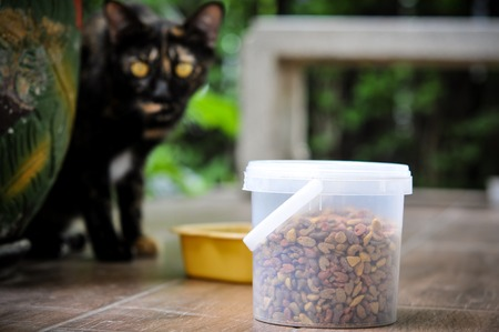 a cat looking at cat food in plastic container