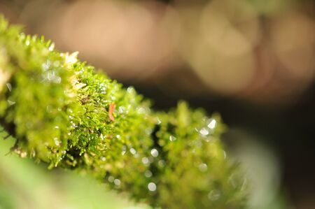 moss on the tree with bokeh background in the tropical garden ,Texture of green leaves, leaf in tropical Forest. Garden and Green wall.