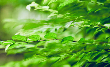 Closeup nature view of green leaf on blurred greenery background in garden with copy space using as summer background natural green tropical plants landscape, ecology, fresh wallpaper concept.