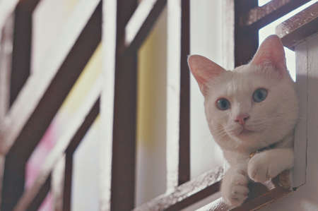 The cute white cat is sitting on House stairs. White color cat. Domestic animals. Cute kitten. The cat with pink ears and nose. relaxing times animal concept