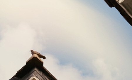 Pigeon standing on the tile roof with cloudy sky background.