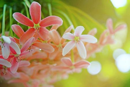 flowers background, nature beautiful, toning design spring nature, sun plants Imagens