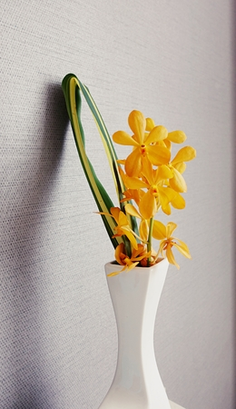 yellow flowers in white color jar on table for interior decoration in modern room style.