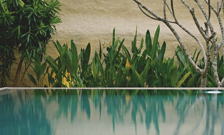 plants decoration in the garden for landscape concept around house, fancy garden around swimming pool in a luxury house. Imagens