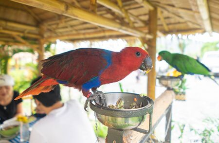 Red Parrot perched on the feeding plate Foto de archivo - 135421915