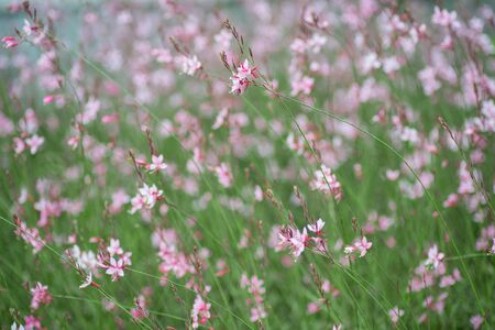 small flowers: Lush pink small flowers