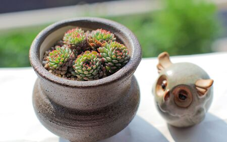 strains: potted succulent plants and owl doll