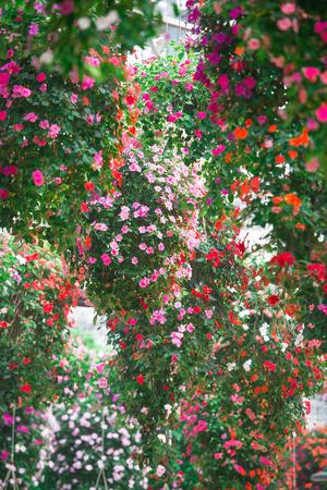 lush: Lush bouquets of crabapple