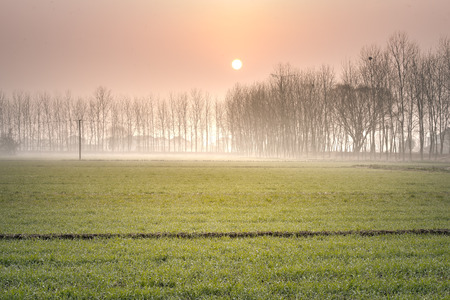 Early spring wheat mists