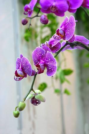 Flower arrangement Imagens
