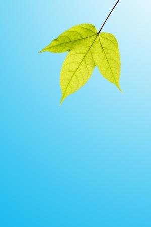 chastity: Leaf