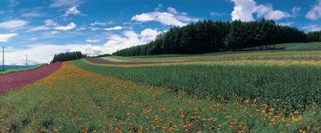 grassfield: Beautiful scene in grassfield in Hokkaido , Japan