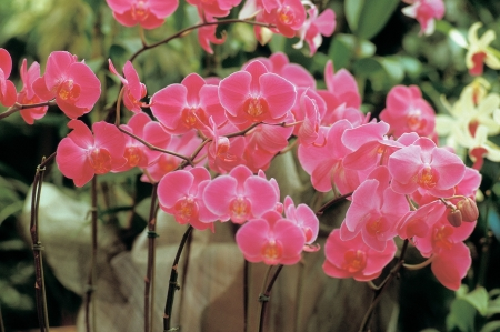 pinks: View of flowers outdoors