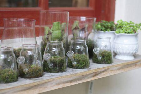 ornamentals: Alley Philharmonic fern flower shop