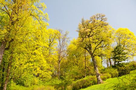 緑の春の木の紅葉の鮮やかな自然の風景