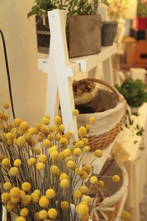 Alley Philharmonic fern flower shop; Zhang Ruiyuan