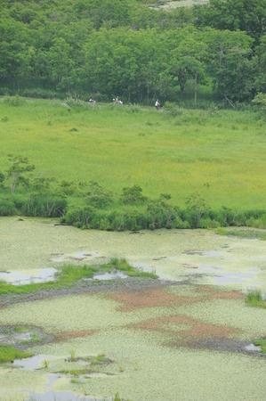 Spot, Kushiro Marsh, Kushiro City, Doutou, Hokkaido, Japan