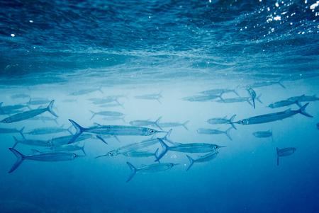 Guam, underwater Stock Photo
