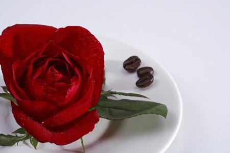Rosa Foto de archivo - 79979115