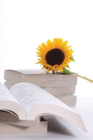 fragility: Stack of books with sunflower