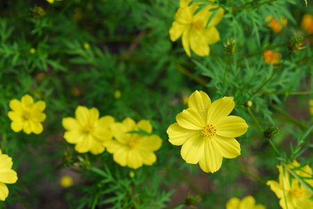 flowers in Tusker Trail