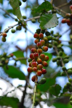 plants in Tusker Trail