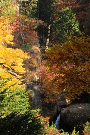 森の中で葉のビュー