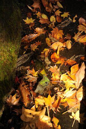 地面に落ちた木の葉のビューをクローズ アップ 写真素材