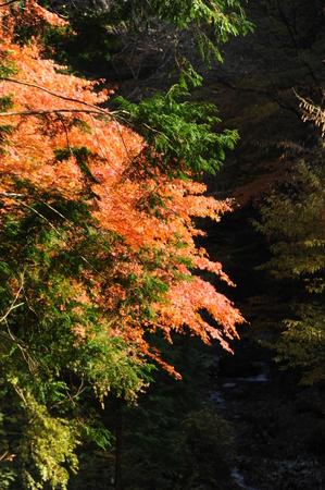 木の枝の葉 写真素材