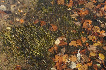 草地の乾燥葉 写真素材