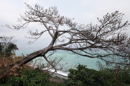 海の景色の木
