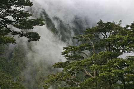 Yushan Hiking Trail Hemlock Forest Taiwan