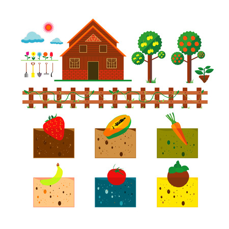 Vector illustration of farm and fruit on white background Vector