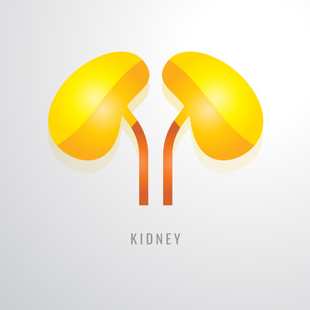 Kidney colour gradation. Yellow orange red modern design vector illustration. Illustration