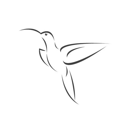Vector image hummingbird design on white background. icon symbol. Illustrator. Black and White Stockfoto - 142656767