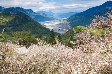 ali: Ali Mountain,Taiwan