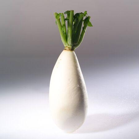 dikon: Vegetable LANG_EVOIMAGES
